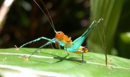 Biologové spočítali pralesní hmyz, výsledky byly otištěny v časopise Science