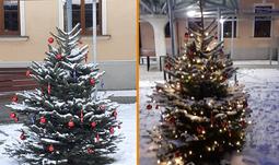 Na Pedagogické fakultě JU rozsvítili vánoční stromek