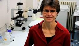 AP 2017 - Kdo řídí vaše geny - seznamte se s epigenetikou