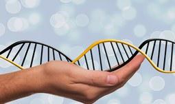 Genové manipulace – hrozba nebo naděje?