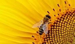Václav Krištůfek: Fenomenální včely